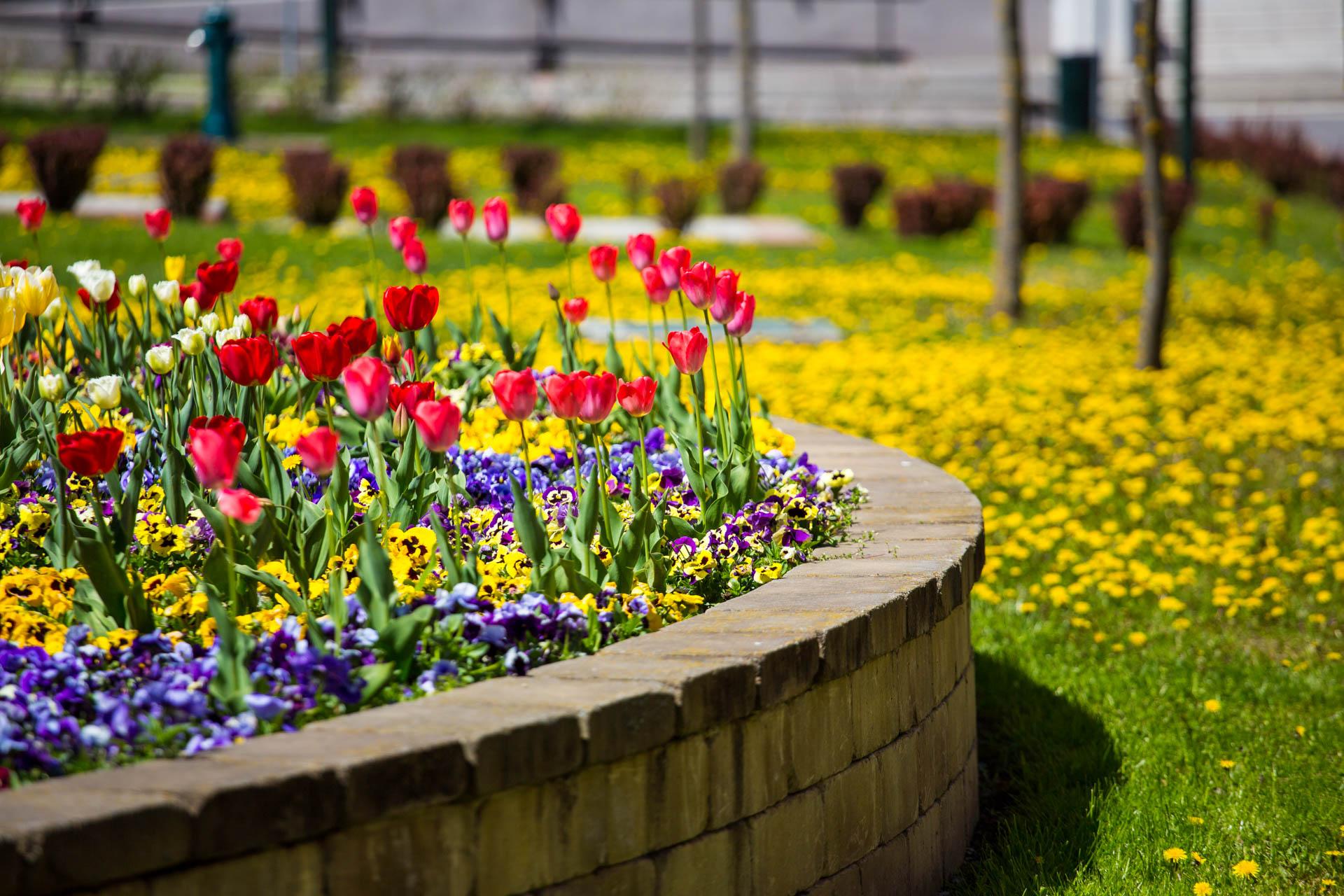 Tavasz van! Virágosítás Kazincbarcikán