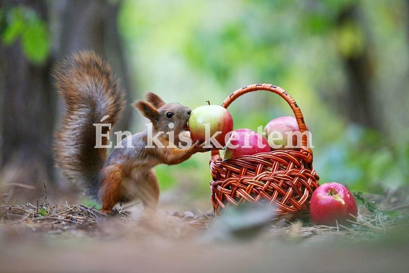 https://kolorline.hu/Hogyan csalogassuk a mókust a kertünkbe?