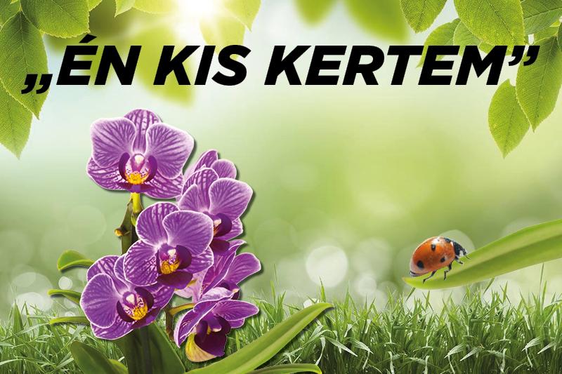 https://kolorline.hu/Milyen növényt ültethetünk nyáron?
