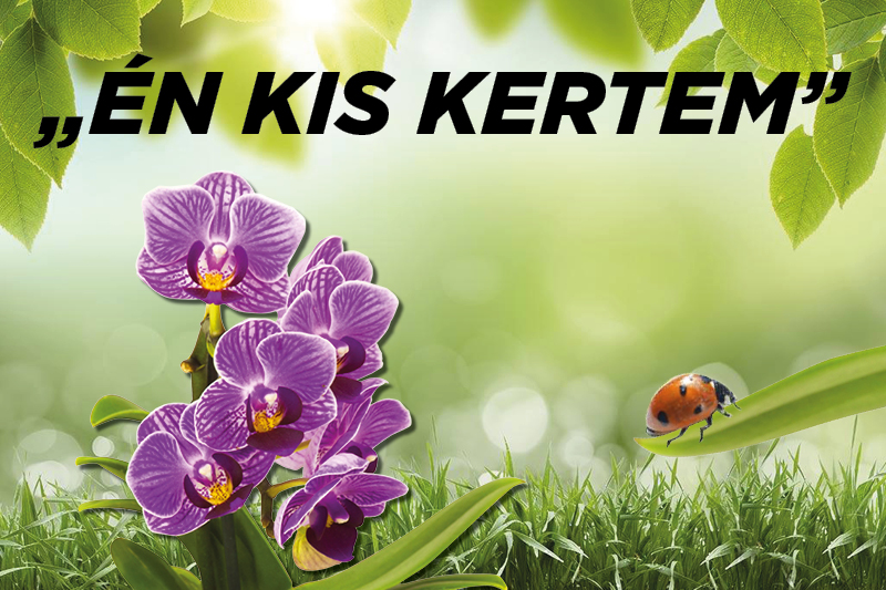 https://kolorline.hu/Nyár végén van a virágok tőosztása
