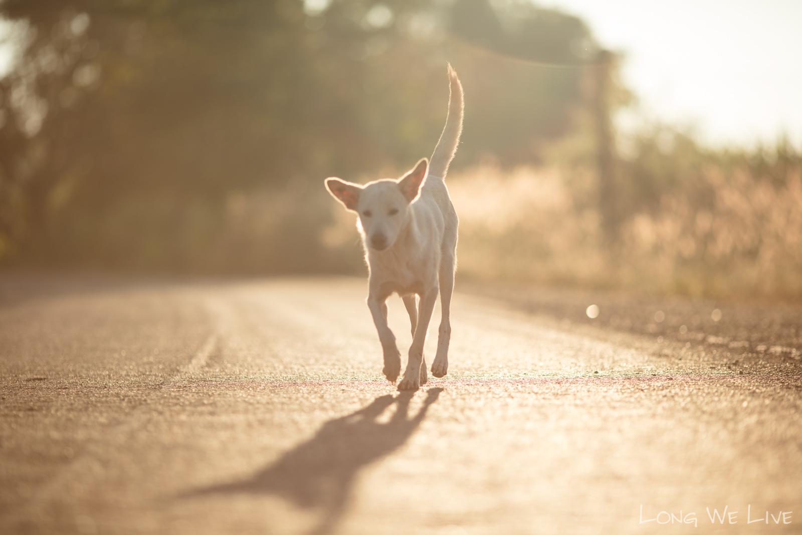 https://kolorline.hu/A felelős állattartás a cél