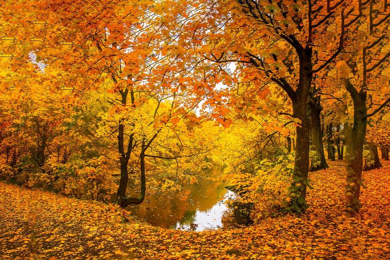 https://kolorline.hu/Ép test ép lélek - ősszel is
